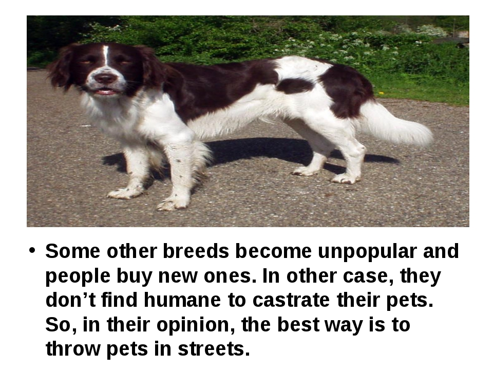 Some other breeds become unpopular and people buy new ones. In other case, t...