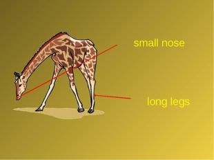 long legs small nose