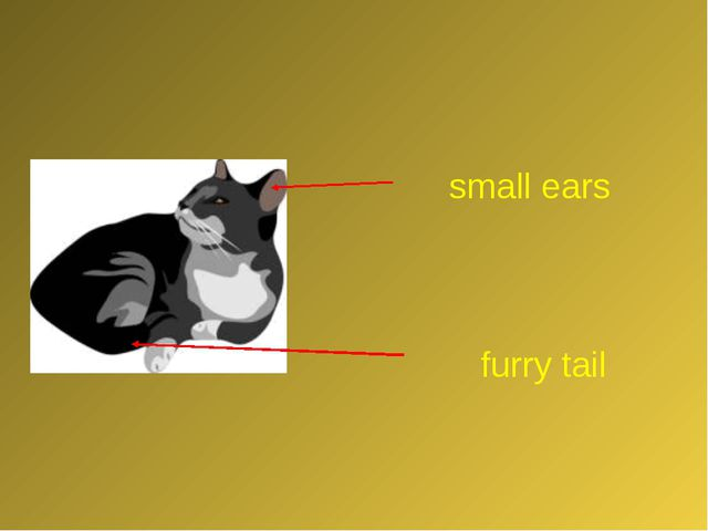small ears furry tail