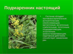 Подмаренник настоящий  Растение обладает противовоспалительным, антисепти