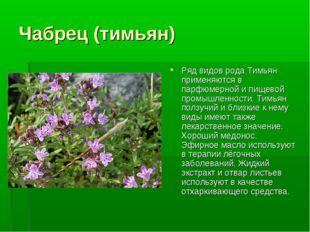 Чабрец (тимьян) Ряд видов рода Тимьян применяются в парфюмерной и пищевой про