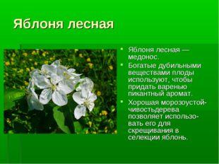 Яблоня лесная Яблоня лесная — медонос. Богатые дубильными веществами плоды ис