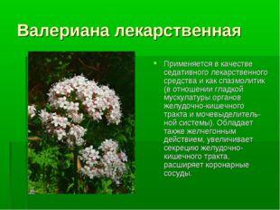 Валериана лекарственная Применяется в качестве седативного лекарственного сре