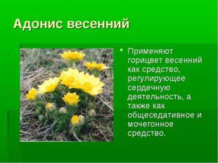 Адонис весенний Применяют горицвет весенний как средство, регулирующее сердеч