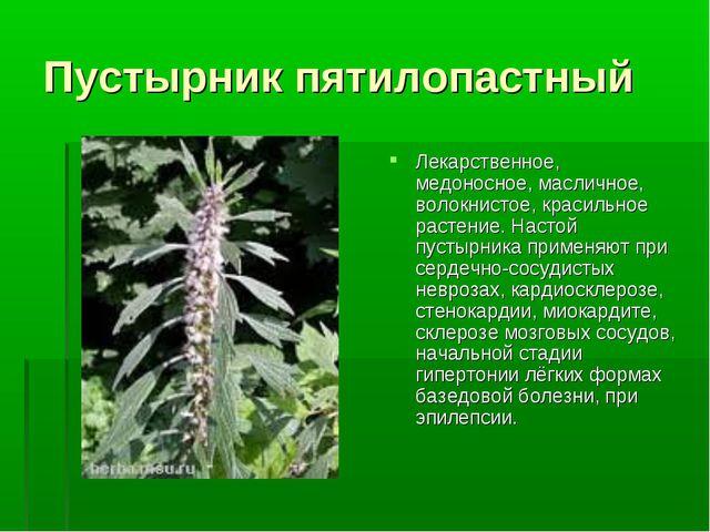 Пустырник пятилопастный Лекарственное, медоносное, масличное, волокнистое, кр...