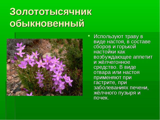 Золототысячник обыкновенный Используют траву в виде настоя, в составе сборов...