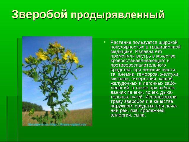 Зверобой продырявленный Растение пользуется широкой популярностью в традицион...