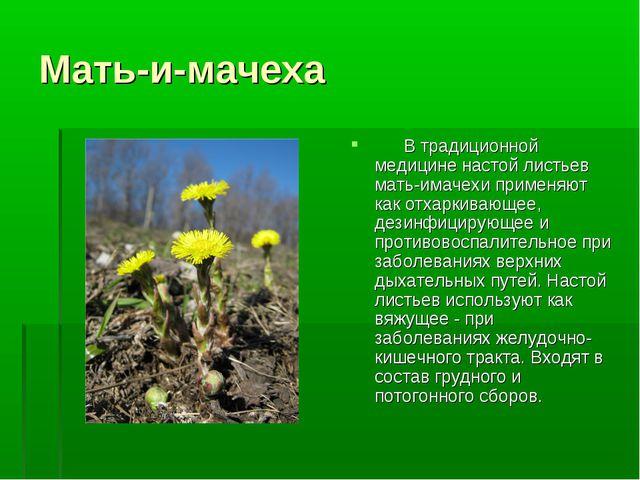 Мать-и-мачеха  В традиционной медицине настой листьев мать-имачехи приме...