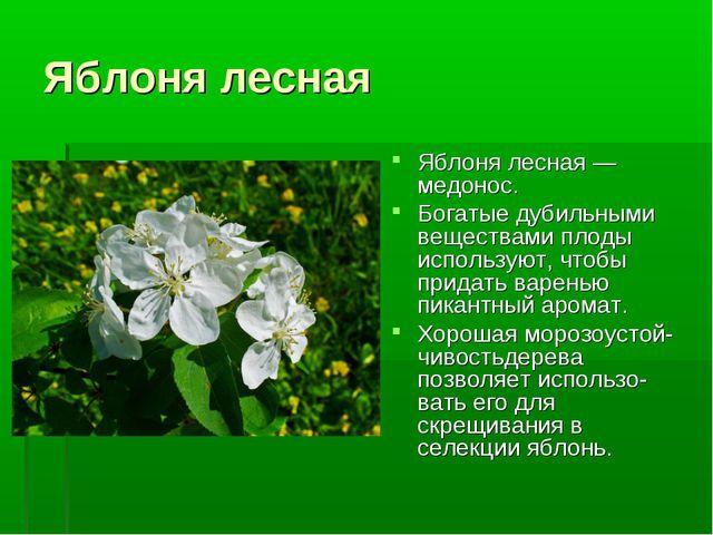Яблоня лесная Яблоня лесная — медонос. Богатые дубильными веществами плоды ис...