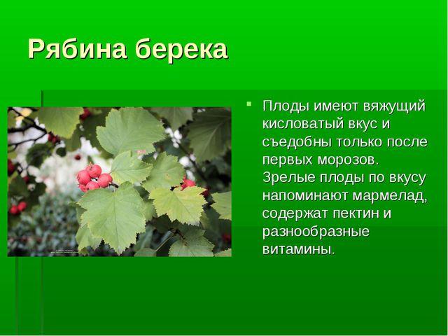 Рябина берека Плоды имеют вяжущий кисловатый вкус и съедобны только после пер...