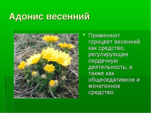Адонис весенний Применяют горицвет весенний как средство, регулирующее сердеч...