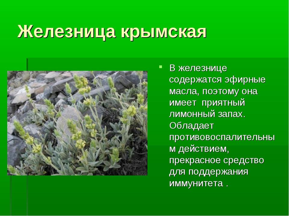Железница крымская В железнице содержатся эфирные масла, поэтому она имеет пр...