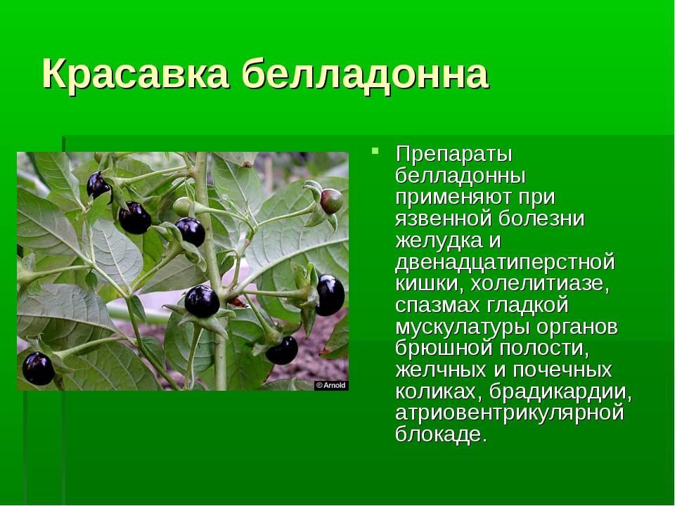 Красавка белладонна Препараты белладонны применяют при язвенной болезни желуд...