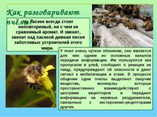 Как разговаривают пчёлы? На пасеке всегда стоит неповторимый, ни с чем не сра