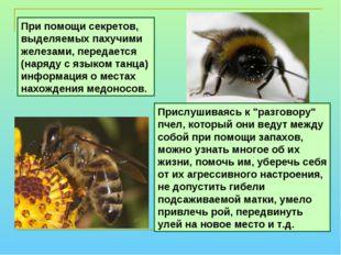"""Прислушиваясь к """"разговору"""" пчел, который они ведут между собой при помощи за"""