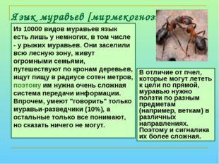 Язык муравьев [мирмекогнозия] Из 10000 видов муравьев язык есть лишь у немног