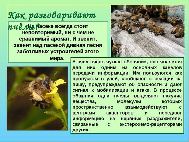 Как разговаривают пчёлы? На пасеке всегда стоит неповторимый, ни с чем не сра...