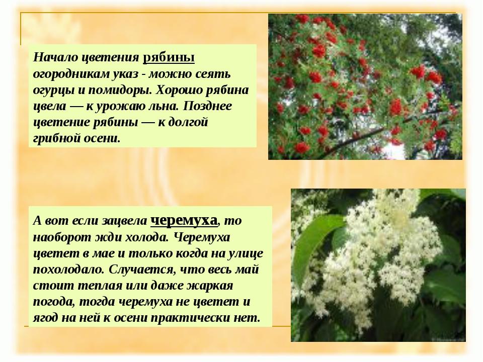 А вот если зацвела черемуха, то наоборот жди холода. Черемуха цветет в мае и...
