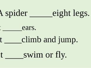 1. A spider _____eight legs. 2. It _____ears. 3. It ____climb and jump. 4. It