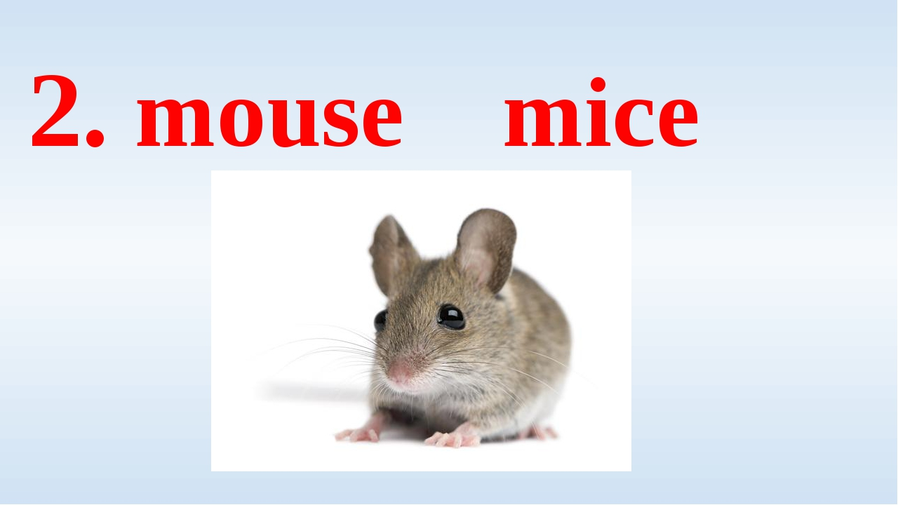 2. mouse mice