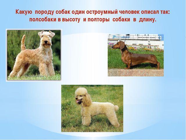 Какую породу собак один остроумный человек описал так: полсобаки в высоту и п...