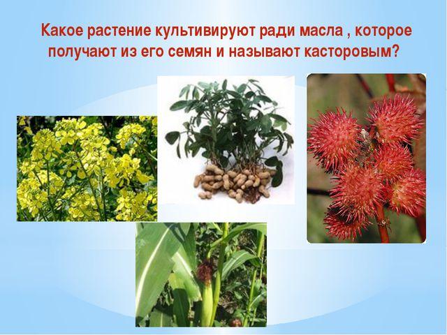 Какое растение культивируют ради масла , которое получают из его семян и назы...