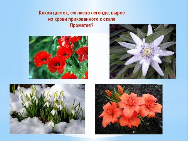Какой цветок, согласно легенде, вырос из крови прикованного к скале Прометея?