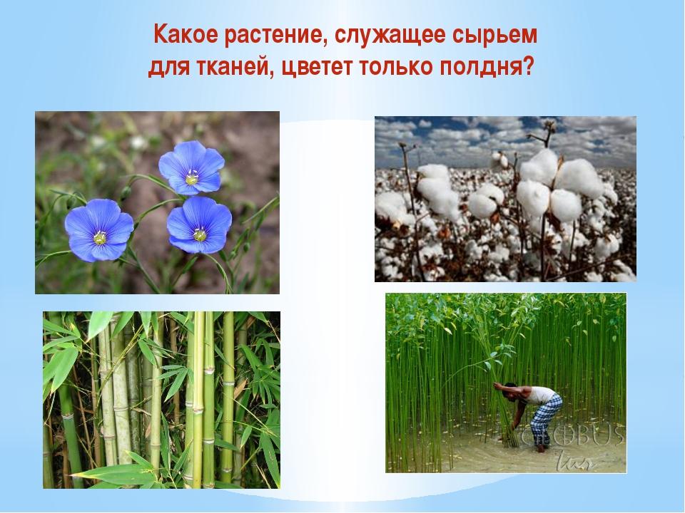 Какое растение, служащее сырьем для тканей, цветет только полдня?