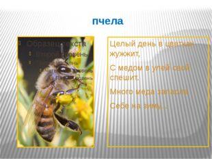 пчела Целый день в цветках жужжит, С медом в улей свой спешит. Много меда зап