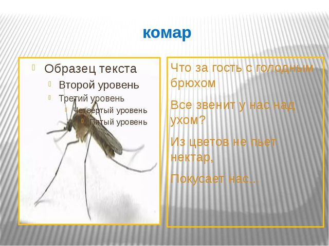 комар Что за гость с голодным брюхом Все звенит у нас над ухом? Из цветов не...