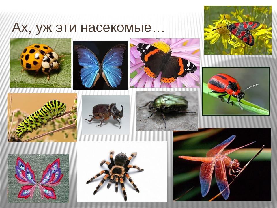 Ах, уж эти насекомые…