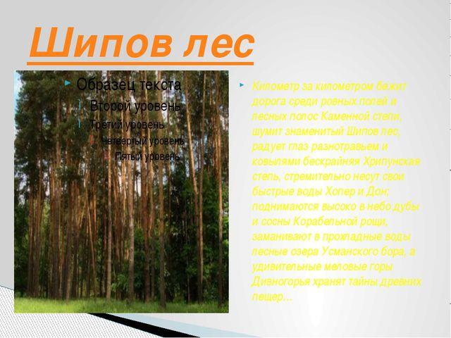 Километр за километром бежит дорога среди ровных полей и лесных полос Каменно...
