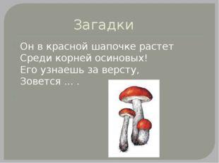 Загадки Он в красной шапочке растет Среди корней осиновых! Его узнаешь за вер