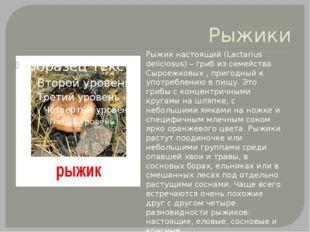 Рыжики Рыжик настоящий (Lactarius deliciosus) – гриб из семейства Сыроежковых