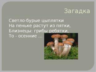 Загадка Светло-бурые цыплятки На пеньке растут из пятки, Близнецы: грибы ребя