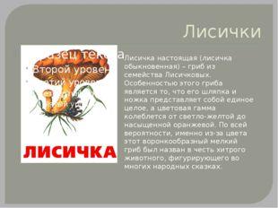 Лисички Лисичка настоящая (лисичка обыкновенная) – гриб из семейства Лисичков