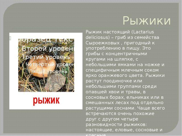 Рыжики Рыжик настоящий (Lactarius deliciosus) – гриб из семейства Сыроежковых...