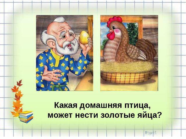Какая домашняя птица, может нести золотые яйца?