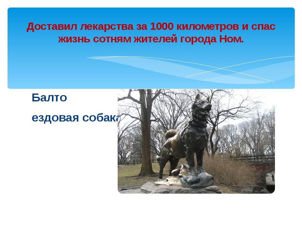 Балто ездовая собака Доставил лекарства за 1000 километров и спас жизнь сотня...