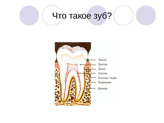 Что такое зуб?