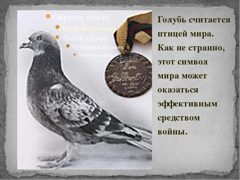Голубь считается птицей мира. Как не странно, этот символ мира может оказатьс...