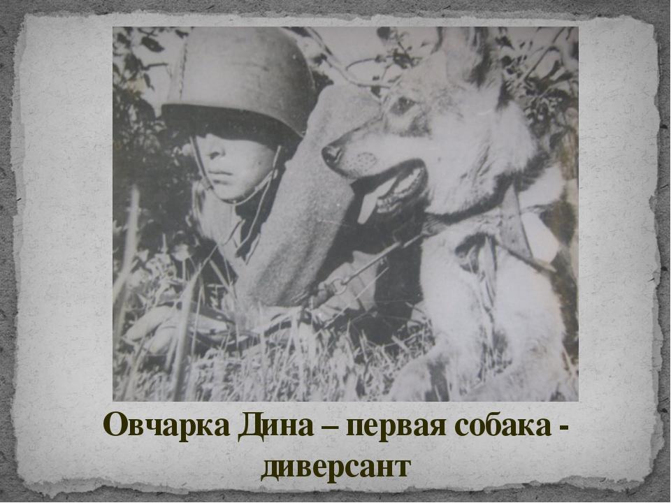 Овчарка Дина – первая собака - диверсант