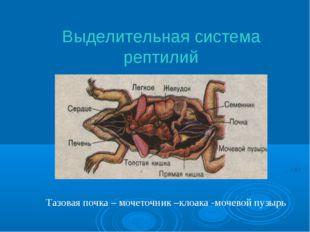 Выделительная система рептилий Тазовая почка – мочеточник –клоака -мочевой пу