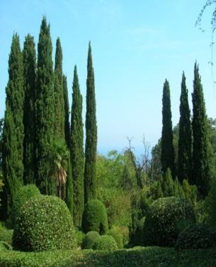 http://sightseen.turistua.com/pictures/obj/roskoshnyj_livadijskij_park-44148.jpg