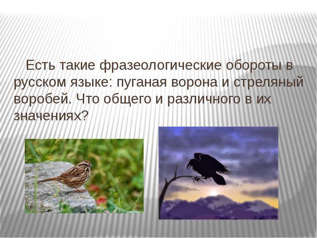 Есть такие фразеологические обороты в русском языке: пуганая ворона и стреля...