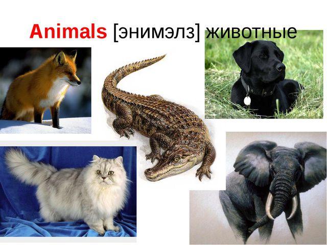Animals [энимэлз] животные