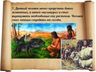 7. Древний человек начал приручать диких животных, а затем окультурил и стал