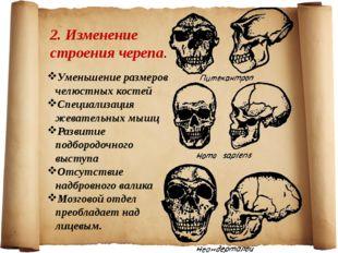 2. Изменение строения черепа. Уменьшение размеров челюстных костей Специализа