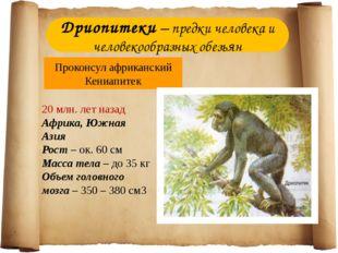 Дриопитеки – предки человека и человекообразных обезьян Проконсул африканский