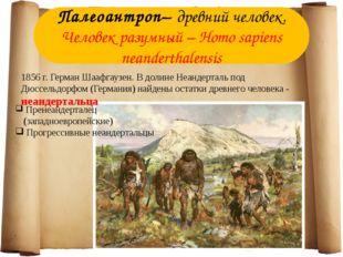 Палеоантроп– древний человек. Человек разумный – Homo sapiens neanderthalensi